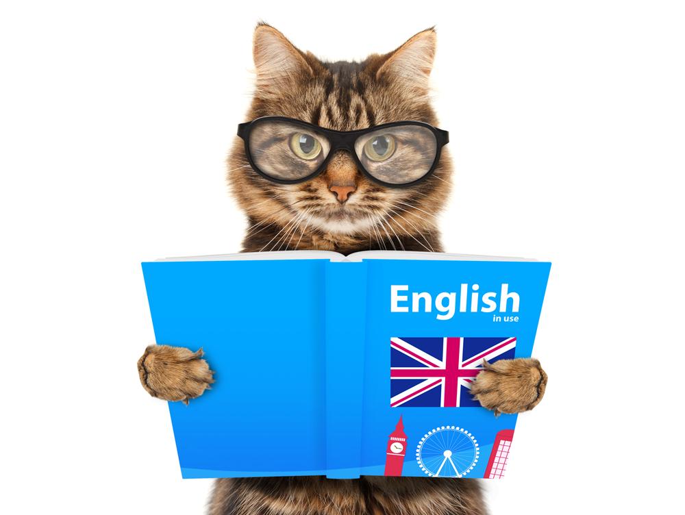 Logo El Gato Inglés